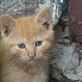 by Wilma Michel - Animals - Cats Kittens