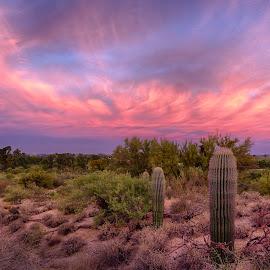 Perspective by Charlie Alolkoy - Landscapes Deserts ( desert, arizona, tucson )