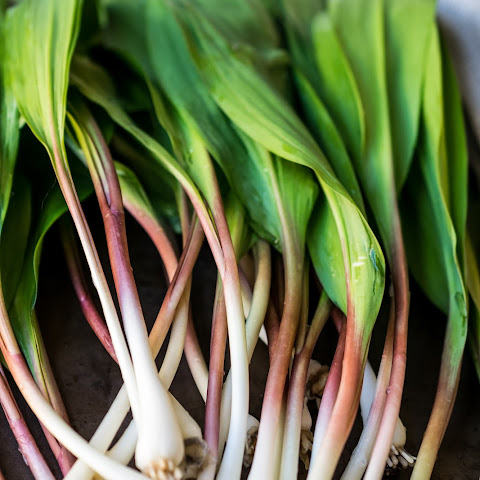 Ramps – Pickles and Pesto