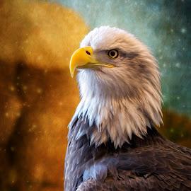 Painted Baldy by Bill Tiepelman - Animals Birds ( pride, bird, eagle, nature, details, bald eagle, wildlife, animal )
