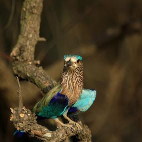 by Anindya Sengupta - Animals Birds