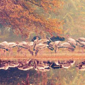 Reflection by Adityendra Solanki - Animals Birds ( sigma, 70-300mm, rajasthan, bharatpur, d7000, apo dg macro, india, adityendra solanki, nikon )
