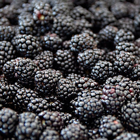 Blackberries from the local Farmer by Sherry Hallemeier - Food & Drink Fruits & Vegetables ( photographic, fruit, still life, fruits, art, fine art, acrylic, canvas, framed art, blackberries, photo, blackberry, photograpy, berry, picking, metal, artistic, card, metallic,  )
