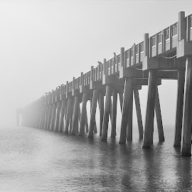 by Shawn Thomas - Black & White Buildings & Architecture (  )