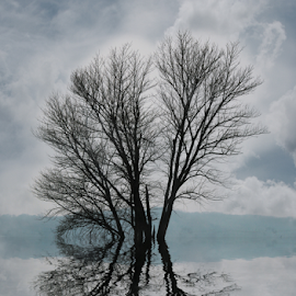 Reflections by Gary Enloe - Digital Art Places ( clouds, water, tree, reflections )