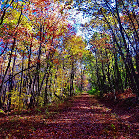 Sunday Hike by Vonelle Swanson - Nature Up Close Trees & Bushes ( fall leaves on ground, fall leaves, foliage, fall, trees, leaves, berries, new jersey )