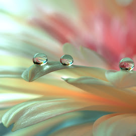 ~*~*~*~ by Juliana  Nan - Nature Up Close Natural Waterdrops ( flora, colorful, drop, colors, art, wallpaper, fine art, waterdrops, bokeh, picture, macro, style, background, artistic, nikon, garden, closeup, flower, gerber )
