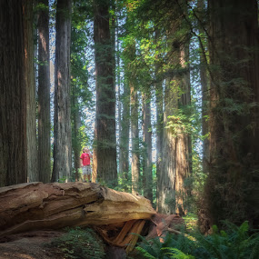 Wide-Eyed Wonder by Carrie Cole - Landscapes Forests ( redwoods, jedidiah smith forest, california, trees, august, big trees, cole summer road trip, carrie cole )