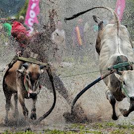 Supercow by Zairi Waldani - Sports & Fitness Rodeo/Bull Riding