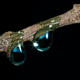 Silent Tears by Robert George - Abstract Water Drops & Splashes (  )