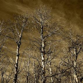 Winter forest by Zoran Mrđanov - Landscapes Forests (  )