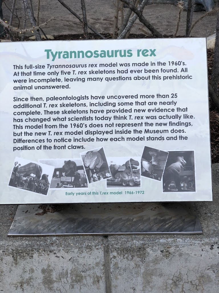 Tyrannosaurus rex This full-size Tyrannosaurus rex model was made in the 1960's At that time only five T. rex skeletons had ever been found. All were incomplete, leaving many questions about this ...