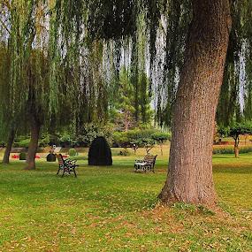 by Sautrik Dutta Mantrani - City,  Street & Park  City Parks ( kashmir srinagar )