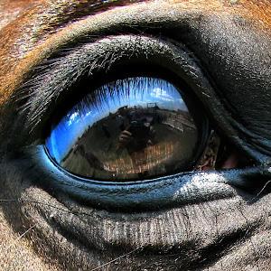 horse eye macro.jpg