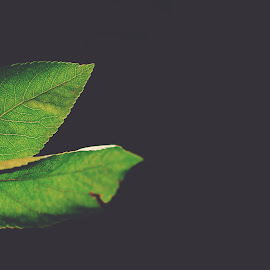 Lonely Leaves by Elizabeth Loera - Nature Up Close Leaves & Grasses ( idaho, macro, green, leaves, photography, black )