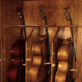 Standing in wait by Sue Connor - Artistic Objects Musical Instruments ( string instrument, musical instrument, cello )