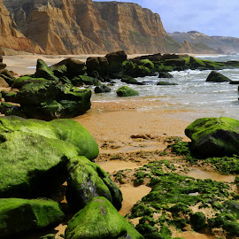 Greens by Gil Reis - Nature Up Close Rock & Stone ( bedaches, places, rocks, nature, stones, sea )