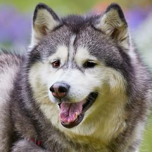 Dog 878~.jpg