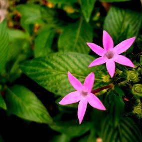 by Deepti Rokade - Flowers Flowers in the Wild (  )