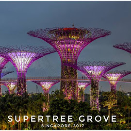 Supertree Grove_Singapore by Carboxylic Tan - Typography Captioned Photos
