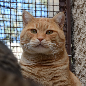 3D Garfield by Pantelis Orfanos - Animals - Cats Portraits