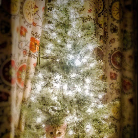 But don't I make a pretty ornament?  by Jennifer Rames - Animals - Cats Playing ( cat, accident, christmas lights, christmas )