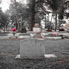 Cedar Hill Cemetery. Washington, La.  by Tiffany Matt - City,  Street & Park  Cemeteries