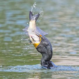 Bird 98828 by Raphael RaCcoon - Animals Birds