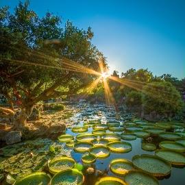 池上微風輕拂,荷葉裙擺搖曳;那道光來自夢想的彼方。。。 by Gary Lu - City,  Street & Park  City Parks