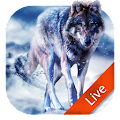 App Ice Wolf Live Wallpaper 3D APK for Kindle