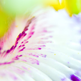 dream by Brian Box - Abstract Macro ( macro, macro flower, macro photography, abstract photography, passion flower )