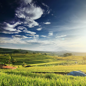morning by Bayu Sanjaya - Landscapes Prairies, Meadows & Fields