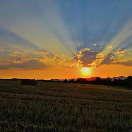 by Vukosava Radenovic - Landscapes Prairies, Meadows & Fields