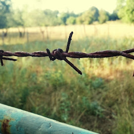 Protect your field by Gabrijel Vrebac - Abstract Macro ( field, fence, spikes, nature, fences, rusty, rust, fields )