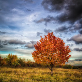Autumn by Kai Buddensiek - Nature Up Close Trees & Bushes ( herbst, hannover, home, hdr, 24-105, autumn, kronsberg )