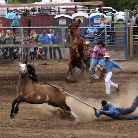 Wild horse race by Gaylord Mink - Sports & Fitness Rodeo/Bull Riding ( dragging, riders, rodeo, ropes, horses )