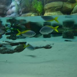 Denver Aquarium   by Kerry White - Animals Fish (  )