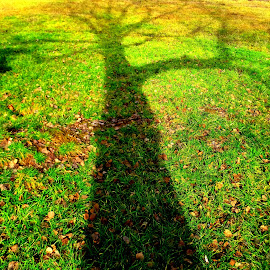 Tree Shadow  by Puiu Alexandru - Abstract Light Painting ( abstract, nature, tree, green, shadow, spring, sun )