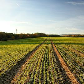 Kam vedeš cesto má? by Dagmar Germaničová - Landscapes Prairies, Meadows & Fields ( field, autumn, green )
