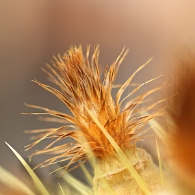 by Dragos Tranca - Nature Up Close Other Natural Objects