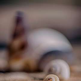 Shell by Jason Elphick - Abstract Macro ( sand, shell, empty, beach )