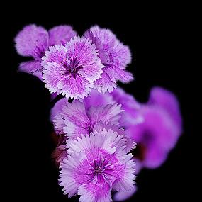 Pink flowers by Kamal Mallick - Flowers Single Flower