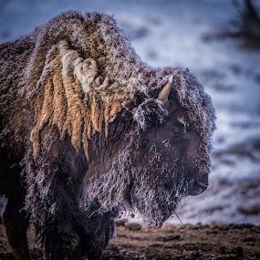 by Stephen  Barker - Animals Other Mammals