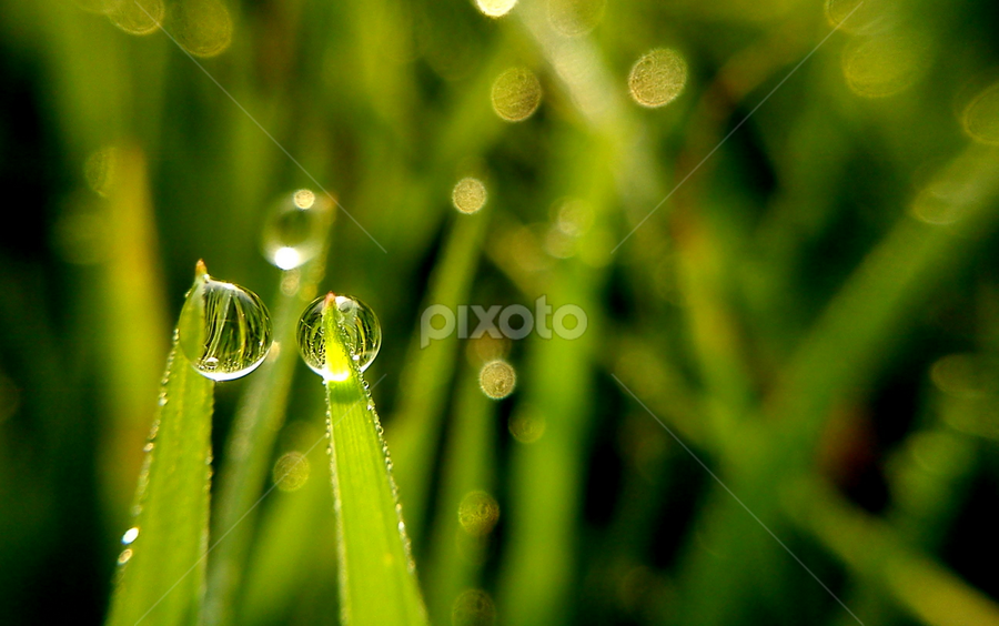 Droplet Couple by Adnan Hidayat Prihastomo - Instagram & Mobile Other ( macro, droplet, green )