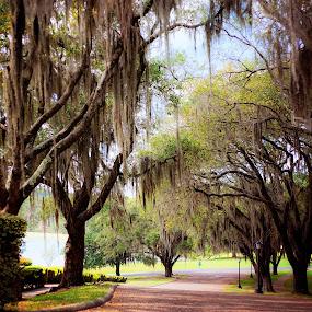 by Sabrina Causey - City,  Street & Park  City Parks ( nature, oak,  )