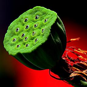 by Koento Birowo - Nature Up Close Gardens & Produce