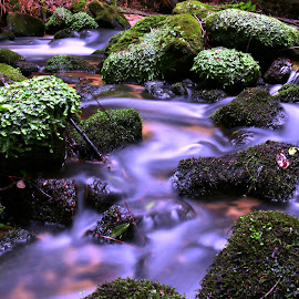 Stones in the water by Gil Reis - Nature Up Close Rock & Stone ( water, life, nature, forest, places, rivers, stones )