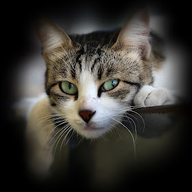 DSC_1618 ps ok tif crop Lazy cat.jpg