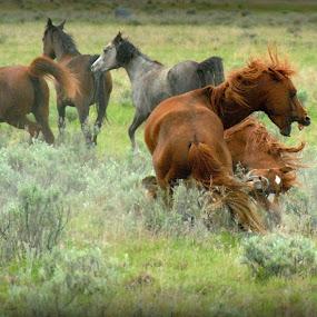 Passion by Susan Hanson - Animals Horses