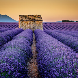 Valensole Dawn by David Long - Buildings & Architecture Other Exteriors ( provence, lavender, valensole )
